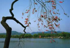 西湖十景蘇堤春暁2